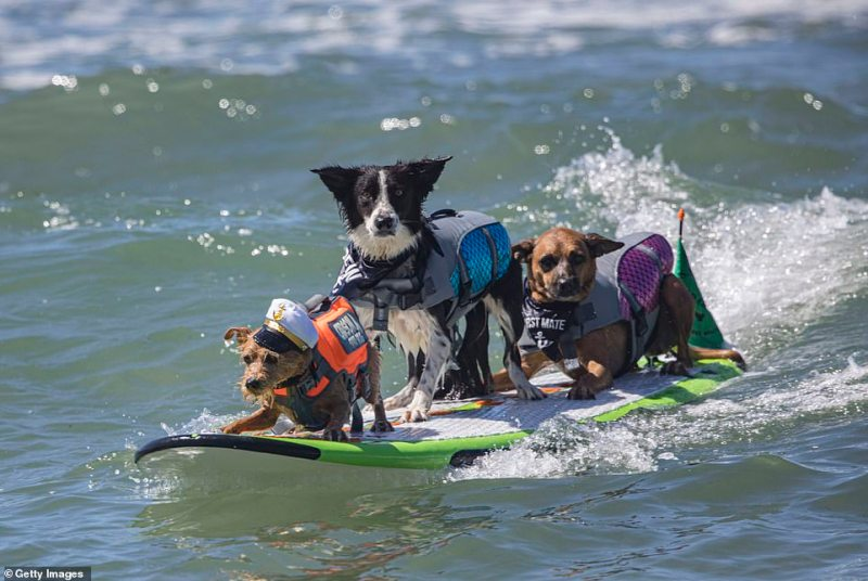 Surfing dogs participated in the 16th Annual Surf Dog Surf-A-Thon at Del Mar Dog Beach in California on Sunday