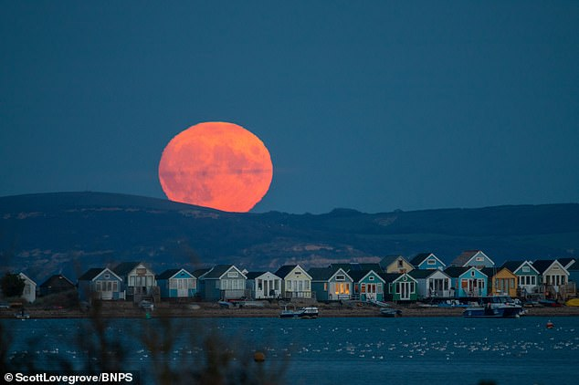 This year it's the fourth full moon of the season and is set to rise at 7:55 p.m. ET - it will also appear full for a total of three days.  The stunning first full moon of September is seen rising over the beach huts at Hengistbury Head in Dorset in 2020