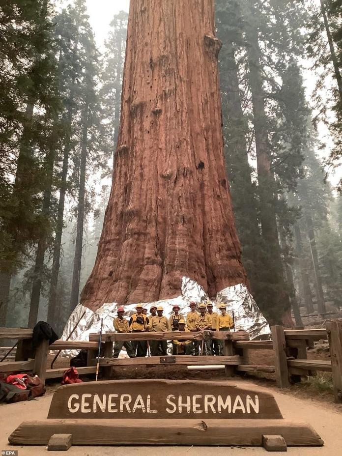Firefighters posing next to The General Sherman Tree after wrapping it in fire-resistant structural wrap