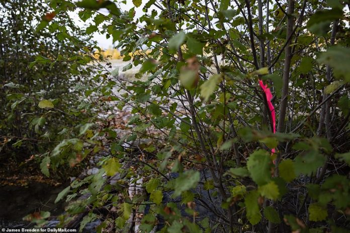 In Spread Creek, Wyoming, a pink ribbon was found tied to the bushes near where the van was parked on the side of the road