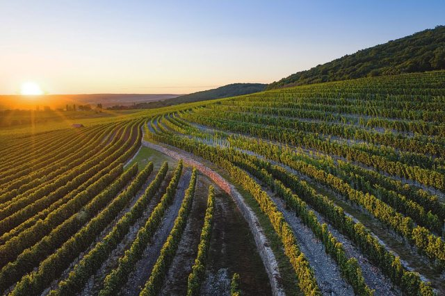 Russia'sSikory Winery, pictured, came 20th - way ahead of the best-ranked U.S vineyard
