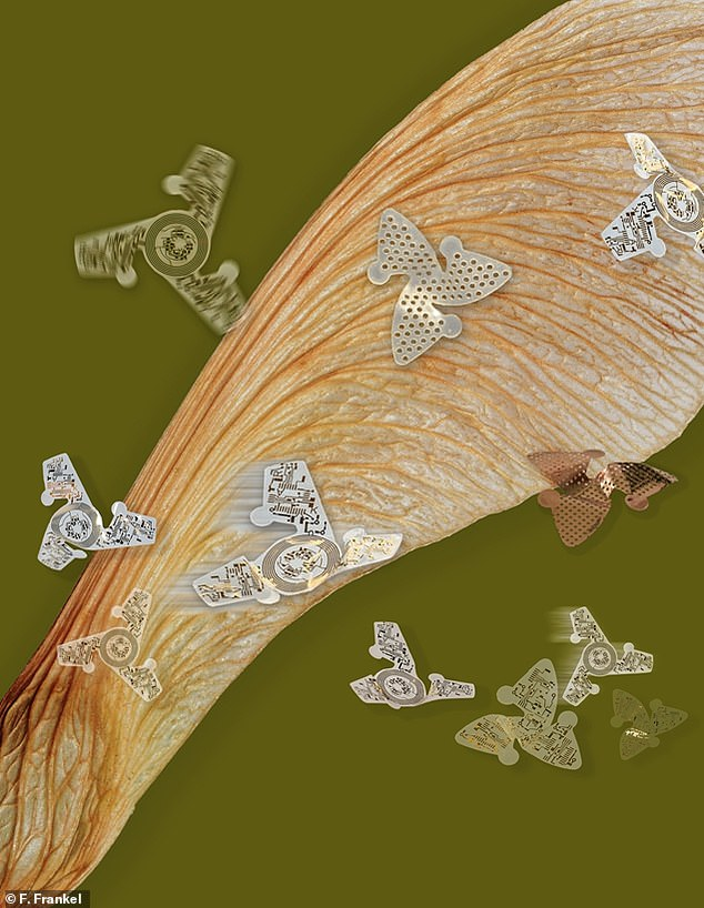 Human-made 3D microfliers surround their nature-made inspiration, a propeller seed from a maple tree. These tiny chips catch the wind as they glide through the air