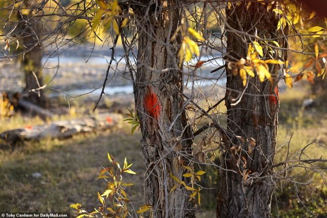 Exclusive crime scene photos show several trees and rocks at the site of Gabby Petito's murder marked with orange spray paint and numbers by the FBI, DailyMail.com can reveal