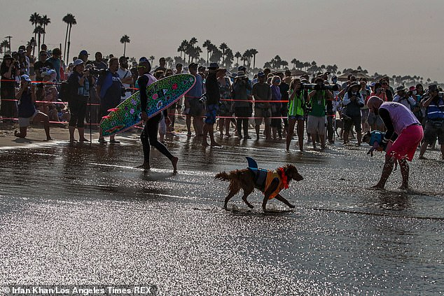 The shooting took place near to a packed Huntington Beach where the US Open of Surfing is taking place