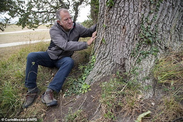 Mr Challinor with one of the oak trees which had four holes drilled through its trunk.Residents lined up to deny any knowledge of the attack and to criticise the 'selfish vandalism'