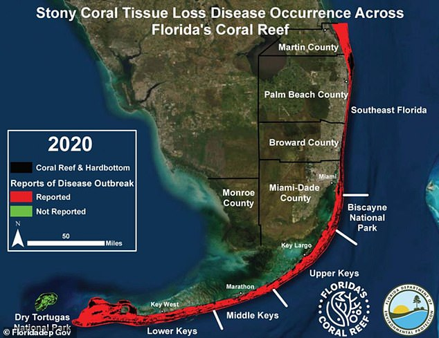 Figure shows a map of where coral has been affected by the loss of stony coral tissue over the past year