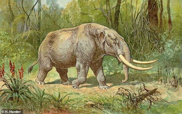 Mastodons are ancient relatives of elephants and mammoths that were believed to have been decimated by humans.  They were among the largest land animals on Earth at the time, measuring 10 feet in length and weighing 8 tons or more.