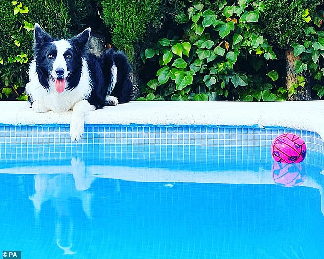 Rico from Spain is lying on the side of the pool.  In the study, researchers wanted to push the limits of their talents, so they challenged owners to teach their dogs six and then 12 new toy names.