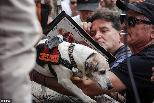 A dog had a sign adorned to it which read 'no green pass' as demonstrators gathered in Popolo square in Rome on Saturday