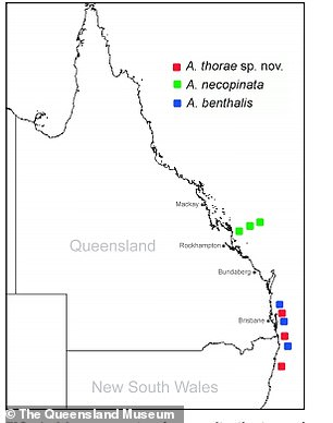 The museum says the mollusks have inhabited parts of Cape Moreton, Queensland and Tweed Heads, New South Wales.
