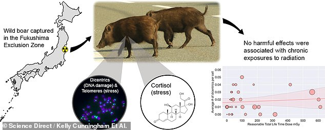 , Wild boars and snakes haven't suffered from radiation at Fukushima nuclear accident, study shows, The Today News USA