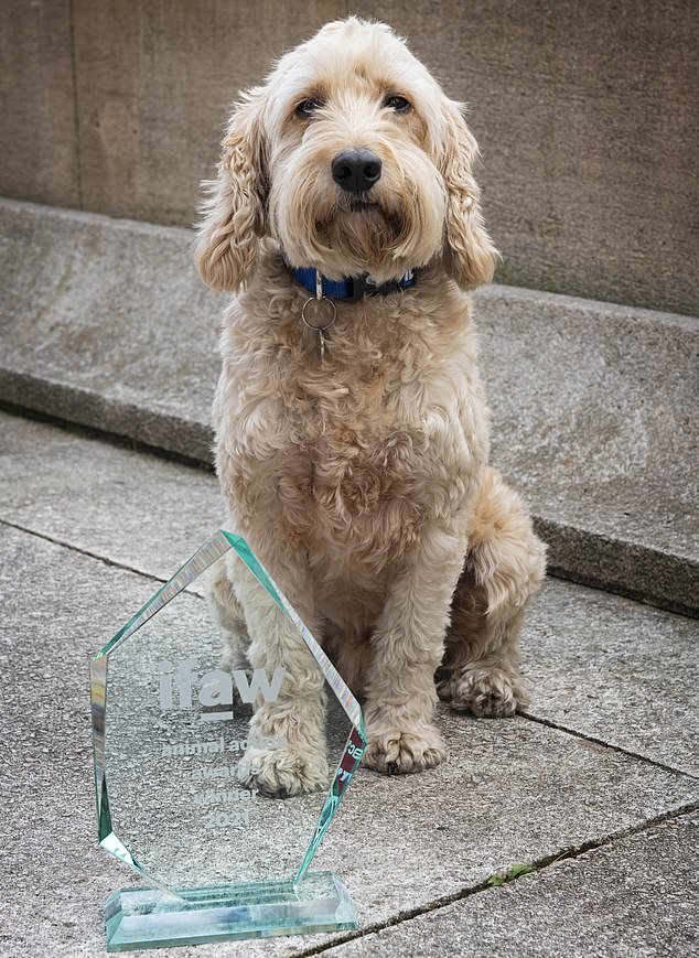 , Therapy dog Jasper gets charity's 'Animal of the Year' award for supporting frontline NHS staff, The Today News USA