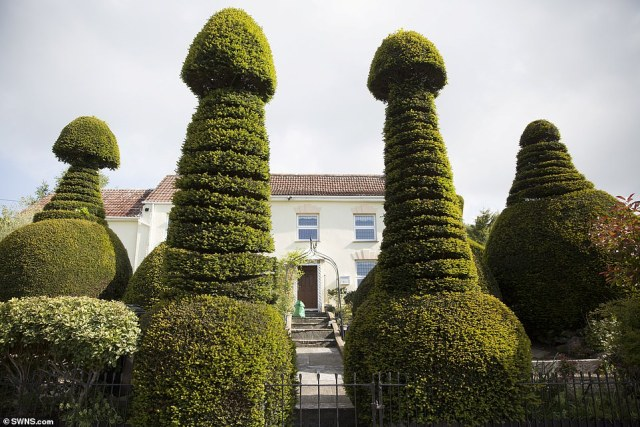 What an entrance: the 200-year-old topiary trees sit in the front garden of the five-bedroom property in Cross, near Axbridge in Somerset