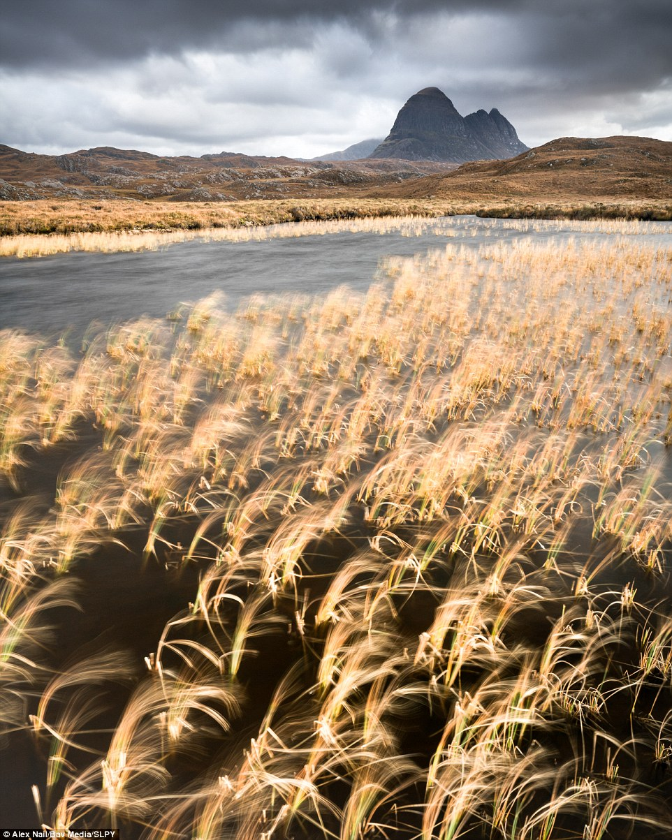 More magic: Also part of Alex Nail's entry, this photograph - entitled Grey and Gold - exposes sunlight striking a lochan of golden grasses with Suilven commanding presence in the distance. This image helped to secure Alex's runner-up title...