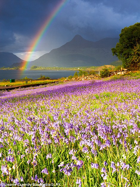 The picture on the right, by Jeanie Lazenby - called Sunshine and Showers - was taken in Glencoe, Highland, and is naturally enhanced by the dominating presence of bluebells and a rainbow. Won the competition's Spring category