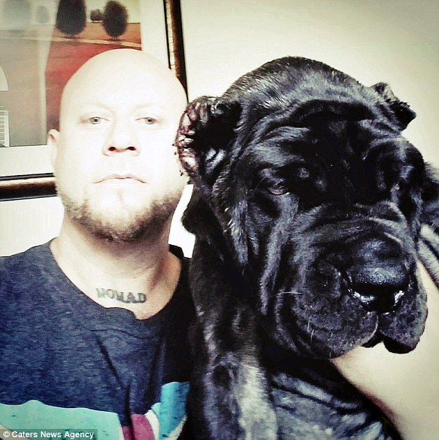 After calling hundreds of breeders and Guinness World Records, owner Jared Howser (pictured), 41, of Salt Lake City, Utah, believes he own's the largest puppy in the world
