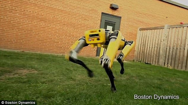 The 54-year-old has been pictured strutting alongside Boston Dynamics' four-legged SpotMini robot (pictured), which has previously been compared to killer canine bots featured in the Netflix series Black Mirror