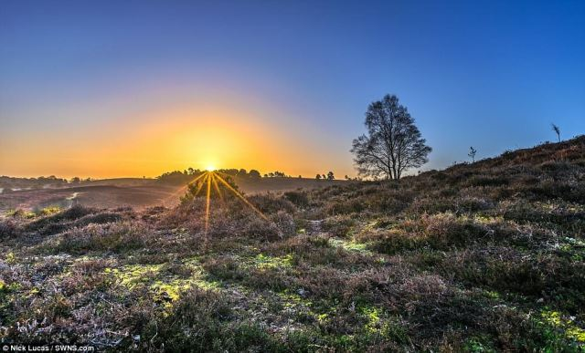 Sunrise at Rockford Common in the new Forest near Ringwood, Hampshire, marked the start of a week of fine weather