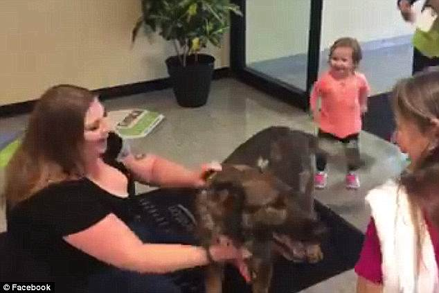 The German Shepherd was reunited with owner Kara Swindle (pictured) and her children in Wichita, Kansas, two days after being accidentally flown to Japan by United Airlines
