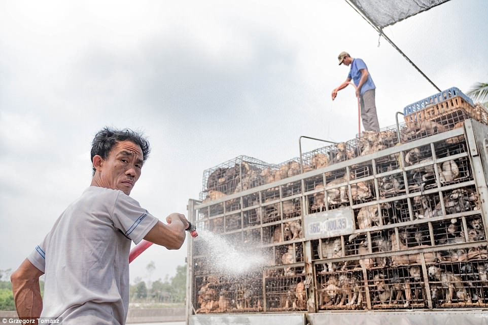 Polish photographerGrzegorz Tomasz Karmas won the Politics of Food prize for this upsetting image of caged dogs reared for meat in Vietnam being sprayed with a hose. He said: 'The dogs are kept alive by being showered during transport to the slaughter houses. It is around 45 degrees out there'