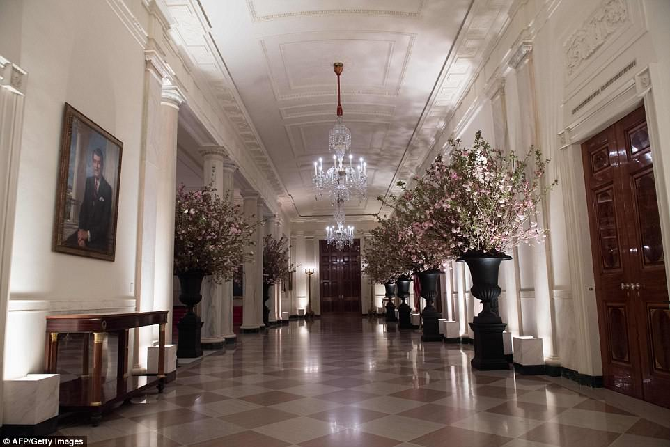 Melania Trump chose 1,200 cheery blossoms to line the Cross Hall, which state dinner guests will walk through to get to the state dining room