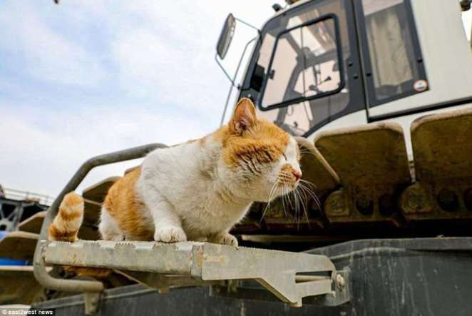 The bridge's resident moggie Mostik, who has become famous after living with the construction team, said he will open the bridge along with the builders and Vladimir Putin
