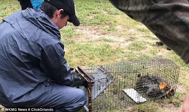 The mother said Brewton, who has worked at the school since 2006, 'pinned' the raccoons and caught them in cages before he 'had the children drown the raccoons'