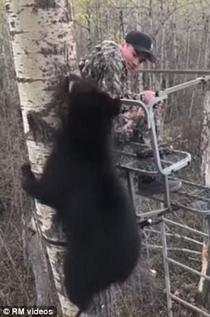 Davin Grunrow, 14, came face to face with a bear cub on his first ever hunting trip