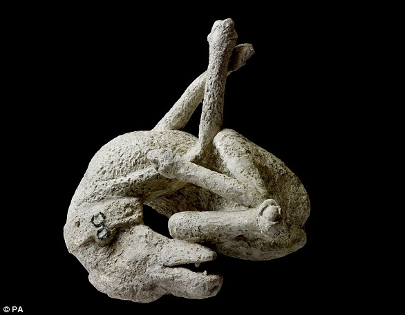 A plaster cast of a dog, from the House of Orpheus, Pompeii, AD 79.Around 30,000 people are believed to have died in the chaos, with bodies still being discovered to this day