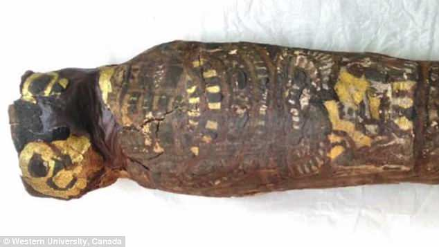 Archaeologists long suspected that a tiny 2,100-year-old Egyptian mummy contained the remains of a hawk.A new analysis of the tiny mummy shows it was not a bird beneath the wrappings, but a stillborn human fetus