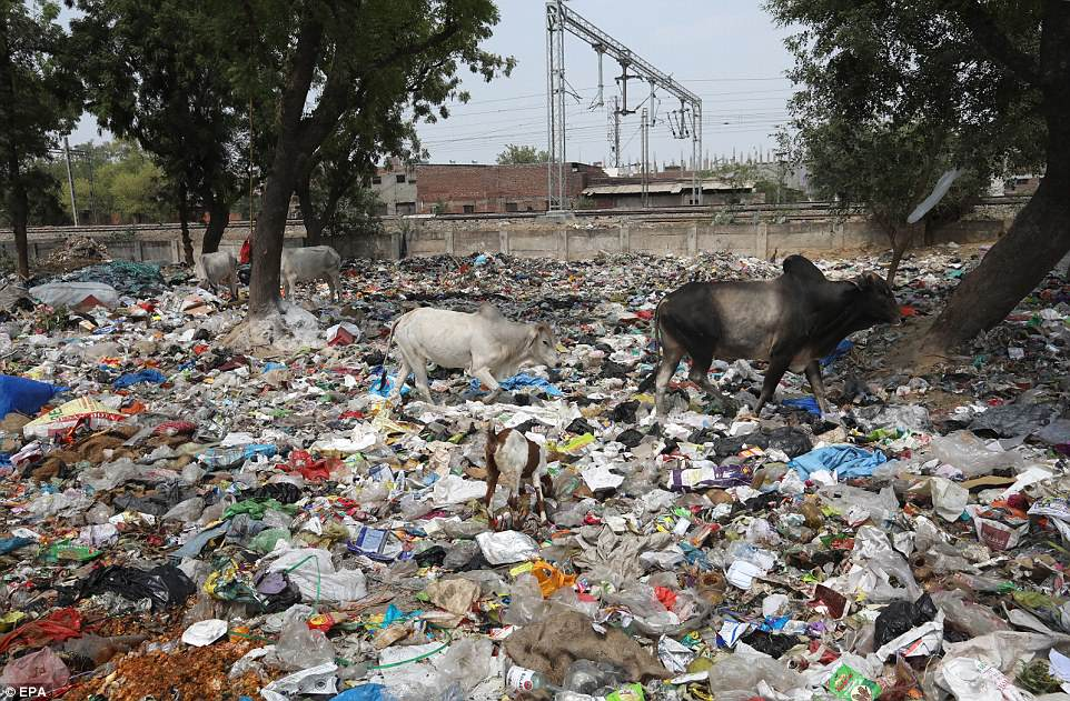 The insidious conditions in the slum tell a sorry tale of India's lopsided economic growth as well as decades of negligence, despite a pledge by Prime Minister Narendra Modi to clean up the country by the time his term ends in 2019