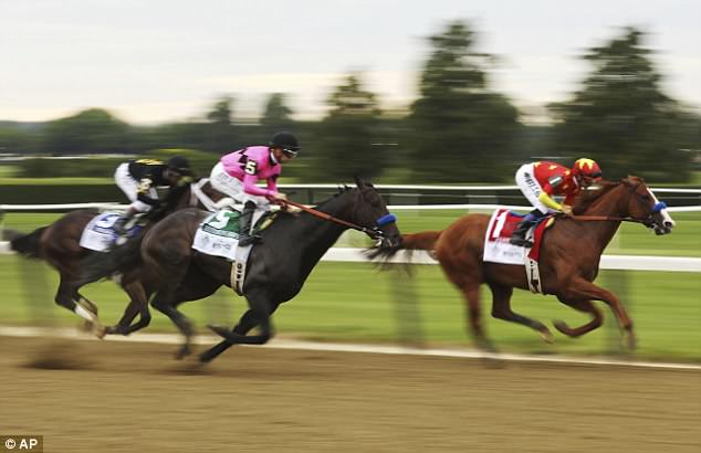 Restoring Hope (center in pink) is seen pinning Bravazo (left) to the rail around the first turn, as Justify (right) maintains the lead in Saturday's race