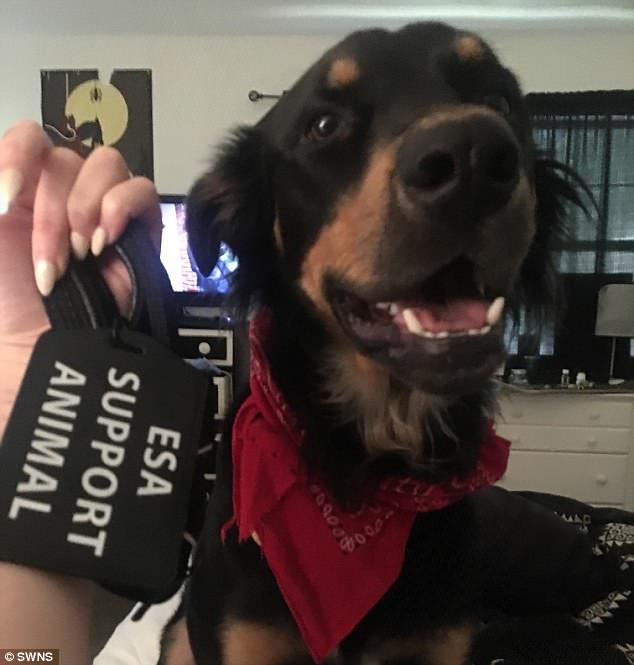 Buddies: Her emotional support dog, a German Shepard named Sergeant Tibbs, will play a key role in her recovery