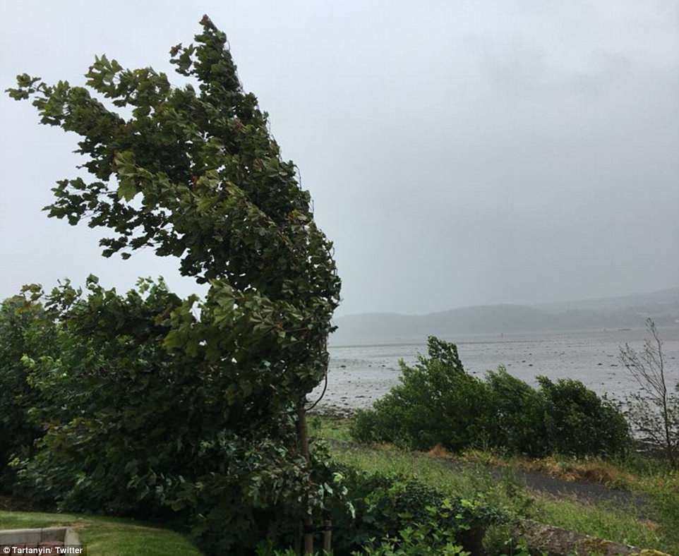 Trees were blown over on the banks of the Clyde in Scotland today, on which one Twitter user joked was a 'refreshing day'