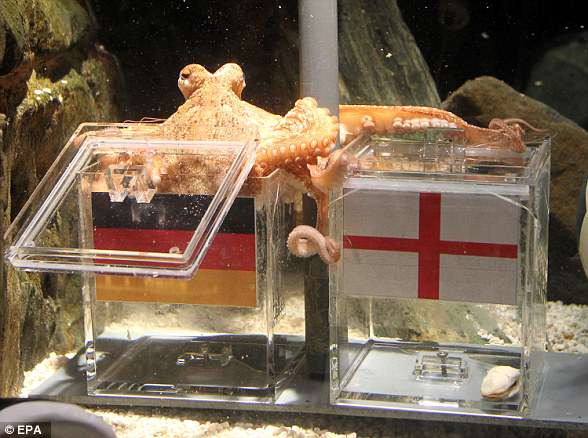 Paul the Octopus, pictured, became a household star during the 2010 World Cup