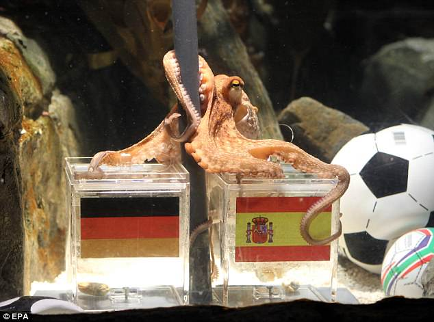 Paul the Octopus became a star of the 2010 World Cup after making eight correct selections. Here he picks Spain to beat Germany in the semi-final, which they did, 1-0
