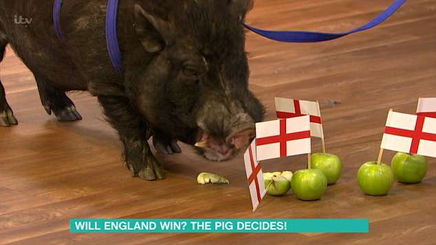 Prediction: The pig finally settled on the the apples which had the England flag of them - predicting their win for their upcoming match against Colombia