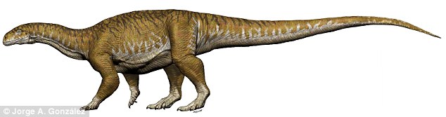 Ingentia Prima (pictured) was about 33 feet (10 metres) long, 14 feet (4 metres) tall and weighed up to ten tonnes. The specimen roamed South America around 210 million years ago