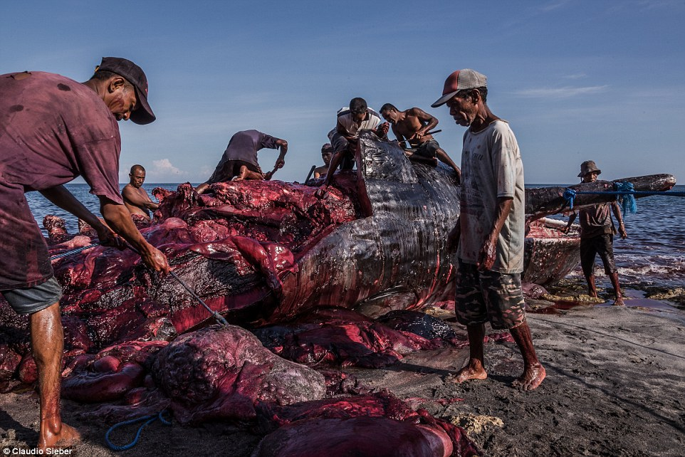 The successful fishermen take two full days to carve up the carcas of the dead whale after they painstakingly haul it to shore