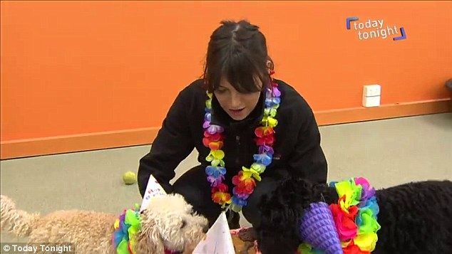 A member of staff (pictured) at Dog City Daycare is on-hand to make sure puppy parties go according to plan