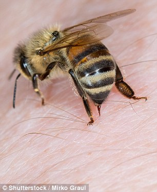 Bees and wasps have stingers which inject venom into a person's skin – bees stingers often come off during an attack whereas wasps can pull theirs out