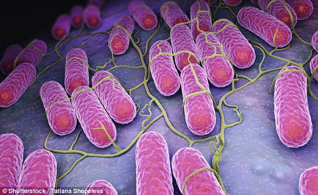 A byproduct of bacteria found in the gut could protect you against Salmonella (pictured), a new study claims