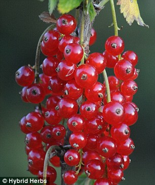 The fruit are supposed to boost your energy levels and reduce muscle aches and pains