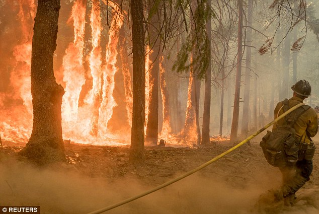Firefighter battle raging wildfire as trees burns near Yosemite National Park on August 6, 2018.
