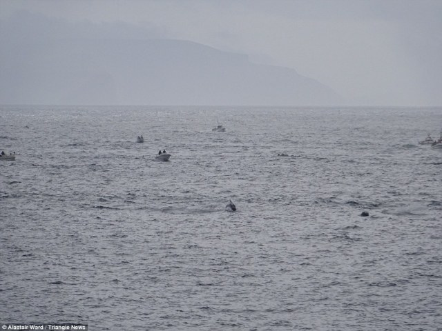 So it begins: Fishing boats are seen out at sea, herding the pod of whales into the bay of the village