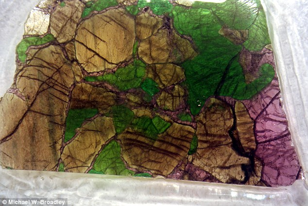 In a previous study, scientists analysed the chemical composition of mantle xenoliths (pictured), rock sections of the lithosphere - a section of the planet located between the crust and the mantle to find out more about the extinction event