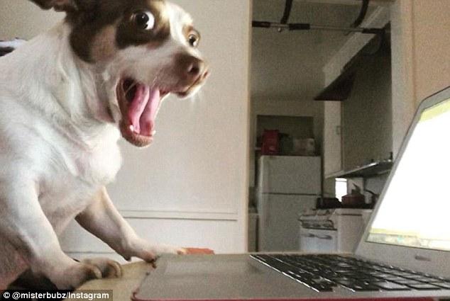 Mr Bubz The Big Eyed Dog Who Has Racked Up Over 55000