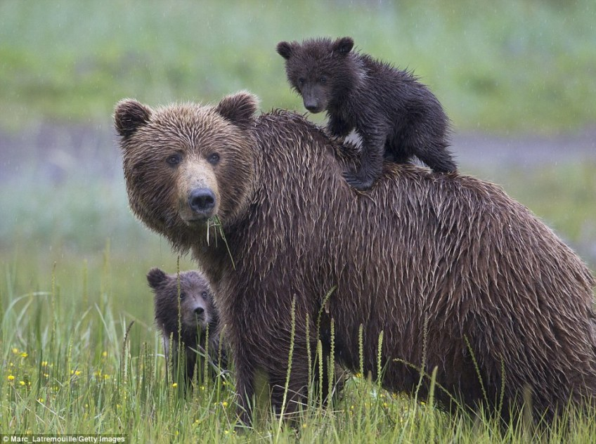 Travellers are advised to wear bright clothing and tie bells to their backpacks to help keep bears at bay. Pepper spray is another recommended measure