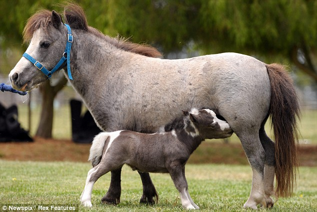 My Little Pony The Tiny Horse That Wants A Name For