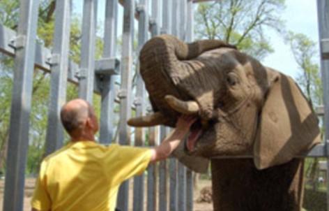Elephant Ninio